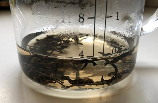 brewing in beaker